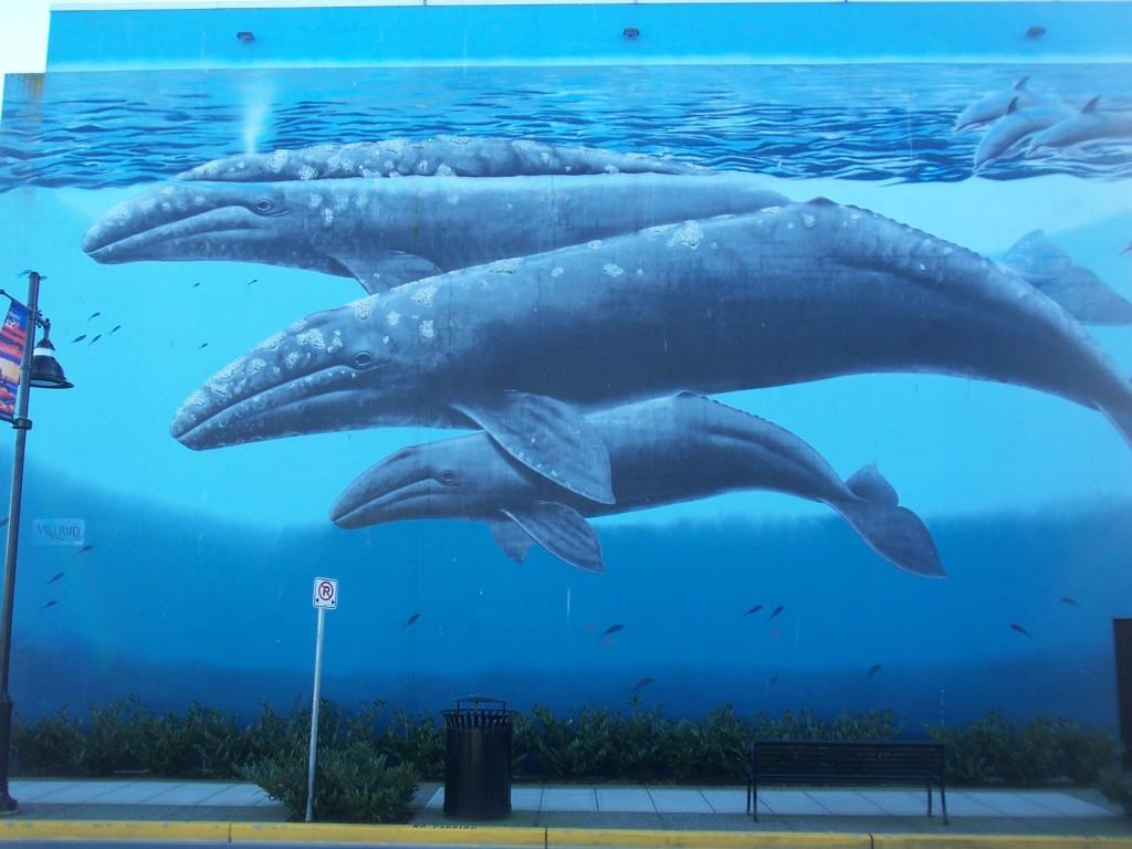 downtown-whale-murr